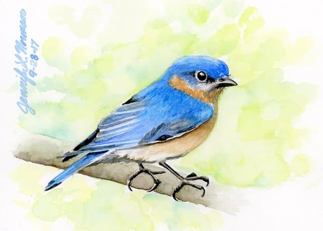 brilliant-blue-bird-jen-norman