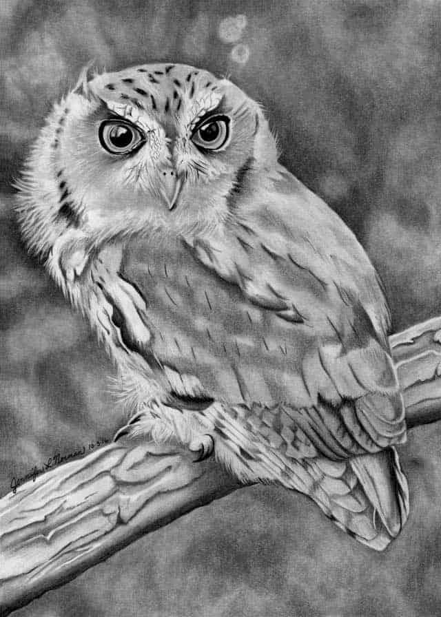 eastern-screec-owl-jen-norman
