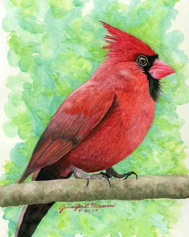 pecky-cardinal-jen-norman