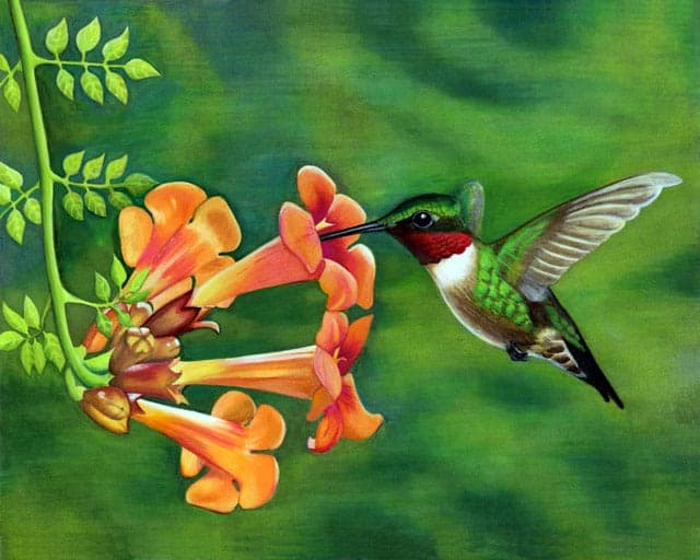 ruby-throated-hummingbird-jen-norman